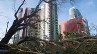 Un arbre abattu par l'ouragan Irma bloque une route dans le centre de Miami, le 11 septembre 2017 [SAUL LOEB / AFP]