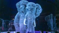 Pas de risque de blessure avec un éléphant en holograme
