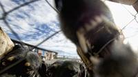 Une gueule de chien [Martin Bernetti / AFP/Archives]