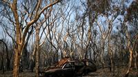 Un véhicule et des arbres calcinés à Lithgow, le 11 janvier 2020 en Australie [SAEED KHAN / AFP]