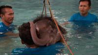 """L'éléphanteau """"Ciel Clair"""" se repose sur un des ses soigants lors d'un traitement d'hydrothérapie à la clinique de la province de Chomburi, le 5 janvier 2017 [ROBERTO SCHMIDT / AFP]"""
