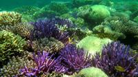 Photo fournie par l''association Pala Dalik qui œuvre en faveur des récifs coralliens, le 19 septembre 2016 à Nouméa en Nouvelle Calédonie [Sandrine JOB / PALA DALIK/AFP/Archives]