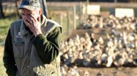 Bernard Dupuy, éleveur de canards, dans sa ferme le 5 janvier 2017 à Bars dans le sud-ouest de la France [REMY GABALDA / AFP]