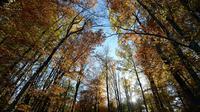 Une forêt des Vosges [Patrick Hertzog / AFP/Archives]
