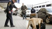 Un chien renifleur à l'aéroport de Detroit, le 26 décembre 2009 [BILL PUGLIANO / GETTY IMAGES NORTH AMERICA/AFP]