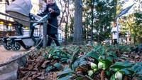 Des plantes au parc botanique de Moscou le 20 décembre 2019 [Yuri KADOBNOV / AFP/Archives]