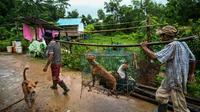 Des employés transportent dans une cage des chiens errants au refuge Thabarwa, le 9 juillet 2019 près de Rangoun, en Birmanie [Ye Aung THU / AFP]