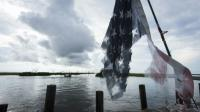 Un drapeau américain en lambeaux dans les bayous de Louisiane près de l'Isle de Jean Charle, le 16 août 2015 [LEE CELANO / AFP]