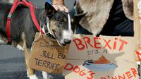 Des propriétaires de chiens et leur animaux domestiques ont manifesté le 7 octobre 2018 à Londres contre le Brexit [Tolga AKMEN / AFP]