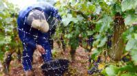 Les noms de domaine en .vin et .wine font l'objet depuis plus d'un an d'un bras de fer opposant l'Icann à plusieurs pays européens et aux vignerons qui craignent des tricheries [Philippe Desmazes / AFP/Archives]