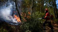 Un pompier combat un feu dans une forêt près du village de Bracal le 11 août 2017. [PATRICIA DE MELO MOREIRA / AFP/Archives]