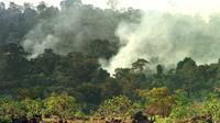 Des volutes de fumées s'échappent de la forêt amazonienne, dans l'Etat de Roraima le 26 mars 2013 [Marie Hippenmeyer / AFP/Archives]
