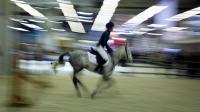 Un cavalier fait une démonstration au Salon du cheval, le 1er décembre 2007 à Paris  [Guillaume Baptiste / AFP/Archives]