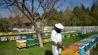 Un apiculteur près de Bucarest, le 4 avril 2013 [Daniel Mihailescu / AFP]