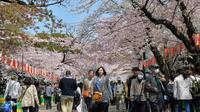 Des personnes marchent sous des cerisiers en fleurs à Tokyo, le 2 avril 2014 [Yoshikazu Tsuno / AFP]