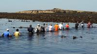 Des randonneurs traversent la mer de l'îlot de Triélen à l'île de Molène le 22 août 2013, dans le finistère [Fred Tanneau / AFP]