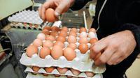 L'éleveur de poules Sébastien Saliou vérifie le contenu d'un emballage d'oeufs le 27 août 2013 à Louannec, dans l'ouest de la France [Fred Tanneau / AFP/Archives]