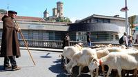 Manifestation contre la réintroduction des ours bruns, des loups et des vautours dans les Pyrénées, à Foix, le 28 juin 2014 [Rény Gabalda / AFP]