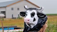 Une manifestante devant la ferme dite des 1.000 vaches, le 29 juin 2014 à Drucat (Somme) [Philippe Huguen / AFP/Archives]