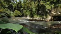 A l'horizon, des dizaines de rizières d'un vert éclatant. Dans le ciel, une nuée de cerfs-volants, et tout proches, des rires d'enfants. A première vue, le village de Sukamaju a tous les charmes de la campagne indonésienne. [DOC CITA-CITARUM]