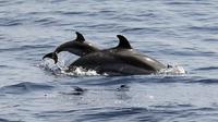 """""""Soyez vigilants!"""" C'est le maître-mot à bord de la vedette où ont embarqué à Villefranche-sur-Mer (Alpes-Maritimes) une cinquantaine de passagers désireux d'observer des cétacés dans leur milieu naturel.[AFP]"""