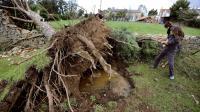 Un arbre déraciné par la mini-tornade à Saint-Hilaire-le-Vouhis, en Vendée, le 14 octobre 2012 [Jean-Sebastien Evrard / AFP]