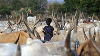 Un enfant parmi des têtes de bétail, le 20 février 2014 à Cuibet au Soudan du Sud  [Tony Karumba / AFP/Archives]