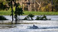 Un dauphin de la rivière Jaraua, en Amazonie, au Brésil observé à l'aide d'un drone, le 28 juin 2018 [Mauro Pimentel / AFP]