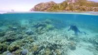 Photographie transmise par WWF le 1er mars 2016, montrant Lyle Vail, directeur de la station de recherche de Lizard Island en train d'examiner le blanchiment du corail au large du Queensland en Australie [WWF AUSTRALIA / WWF AUSTRALIA/AFP]