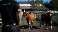 Un détenu dans la ferme Rodjan, à Mariestad, en Suède, le 4 juillet 2018 [Jonathan NACKSTRAND / AFP]