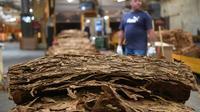 """Des """"strips"""" de feuilles de tabac dans l'usine de France Tabac à Sarlat-la-Caneda, le 20 septembre 2019 [Mehdi FEDOUACH / AFP/Archives]"""