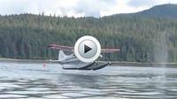 Le pilote s'est aperçu au dernier moment de la présence d'une baleine.