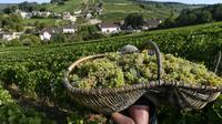 Vendanges à Pernand-Vergelesses, en Bourgogne, le 5 septembre 2018. Le raisin y est récolté à l'aide de grands paniers en osier     [PHILIPPE DESMAZES / AFP]
