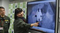 Une responsable du zoo d'Ueno à Tokyo, Mikako Kaneko (G) montre un bébé panda lors d'une conférence de presse le 12 juin 2017 [Kazuhiro NOGI / AFP]