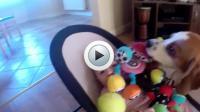 Pour se faire pardonner, le chien a posé une multitude de jouets sur le bébé.