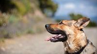 Parmi les meilleurs amis de l'homme, le Golden Retriever - ou Labrador - caracole en septième position.