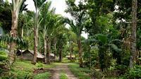 Les meurtres se sont déroulés dans la région de Bougainville, à l'est de la Papouasie - Nouvelle Guinée