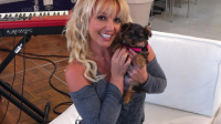 Britney Spears a une nouvelle chienne