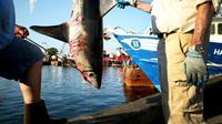 Un requin-taupe de 265 livres pesé lors du 31e Tournoi de requins-monstres de l'Atlantique Nord à State Pier 3 le 15 juillet 2017 à New Bedford, dans le Massachusetts [Maddie Meyer / GETTY IMAGES NORTH AMERICA/AFP/Archives]