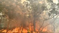 Un pompier luttant contre les incendies au nord de Sydney, le 10 décembre 2019 [SAEED KHAN / AFP]