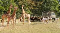 Vivre l'expérience d'un vrai safari près de Nantes
