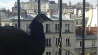 Un paon s'est posé sur le balcon d'un appartement situé au 6e étage à Paris