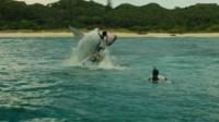 Le cinéma d'horreur se nourrit avec plaisir de requins affamés