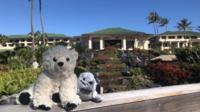 Les deux nouveaux amis ont pris du bon temps à Hawaï, en attendant leur retour aux Etats-Unis.