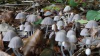 L'homme se serait mutilé après avoir consommé des champignons hallucinogènes