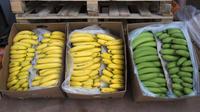 500 kilogrammes de cocaïne ont été découverts dans un chargement de bananes provenant de Colombie vendredi au marché international de Rungis.