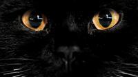 chat noir malchance malheur