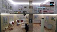 Des petits chats dans une maison de poupée sont désormais des stars