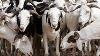 Pour parvenir à cette conclusion, l'équipe de chercheurs a observé le comportement de 20 chèvres face à des images de visages humains.