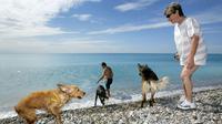L'étude menée par des chercheurs britanniques indique que les chiens sont sensibles à l'attention des humains.